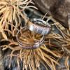 Partnerringe: Symbol der Zusammengehörigkeit ganz ohne Trauschein | Style my Fashion